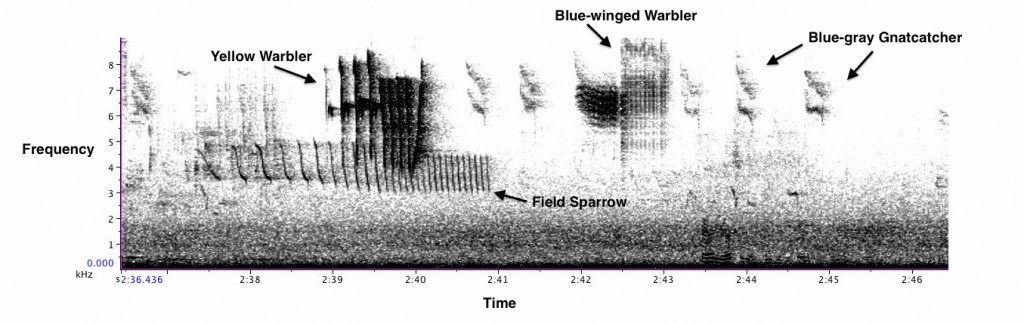 Spectrogram from Charlie's recording